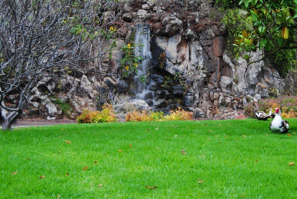 La biodiversidad canaria reina en la nube for Jardin botanico viera y clavijo