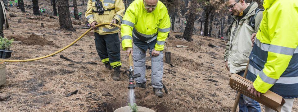 Gran Canaria celebra el Día del Árbol plantando 3.000 ejemplares de árboles en la zona afectada por el incendio
