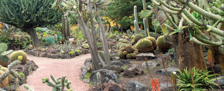 El Jardín Canario, el segundo espacio más visitado de Las Palmas de Gran Canaria